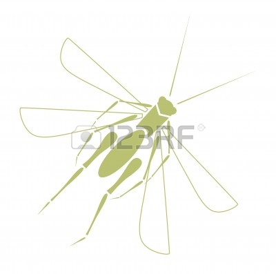 A Magic Insect Tattoo On White Background