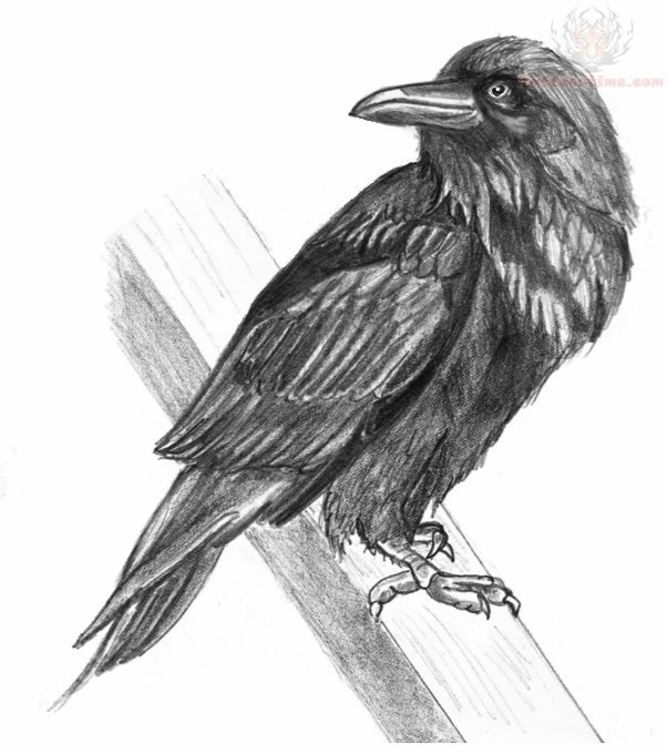 Black Crow On Branch Tattoo Drawing