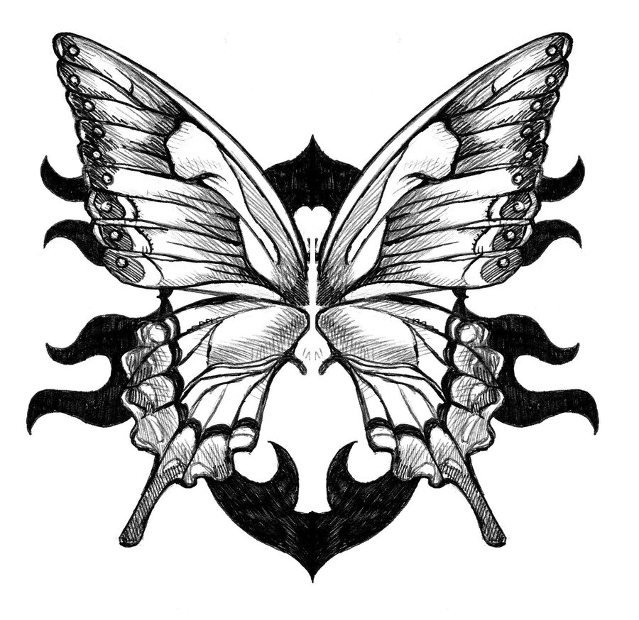 butterfly tattoo drawing real photo pictures images and