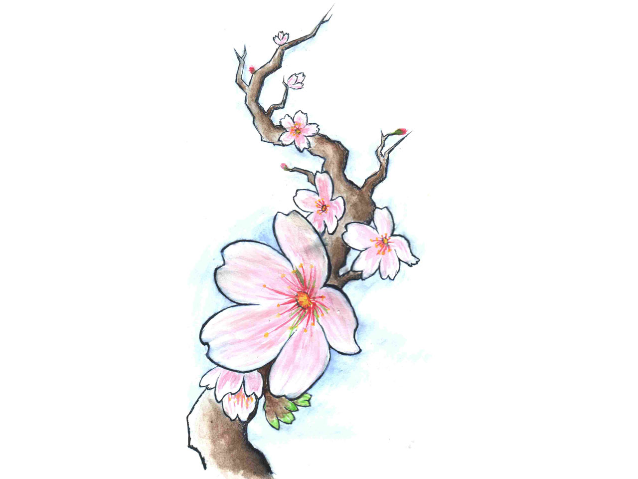 Cherry Blossom Tree Frog Tattoo Design in 2017: Real Photo ...