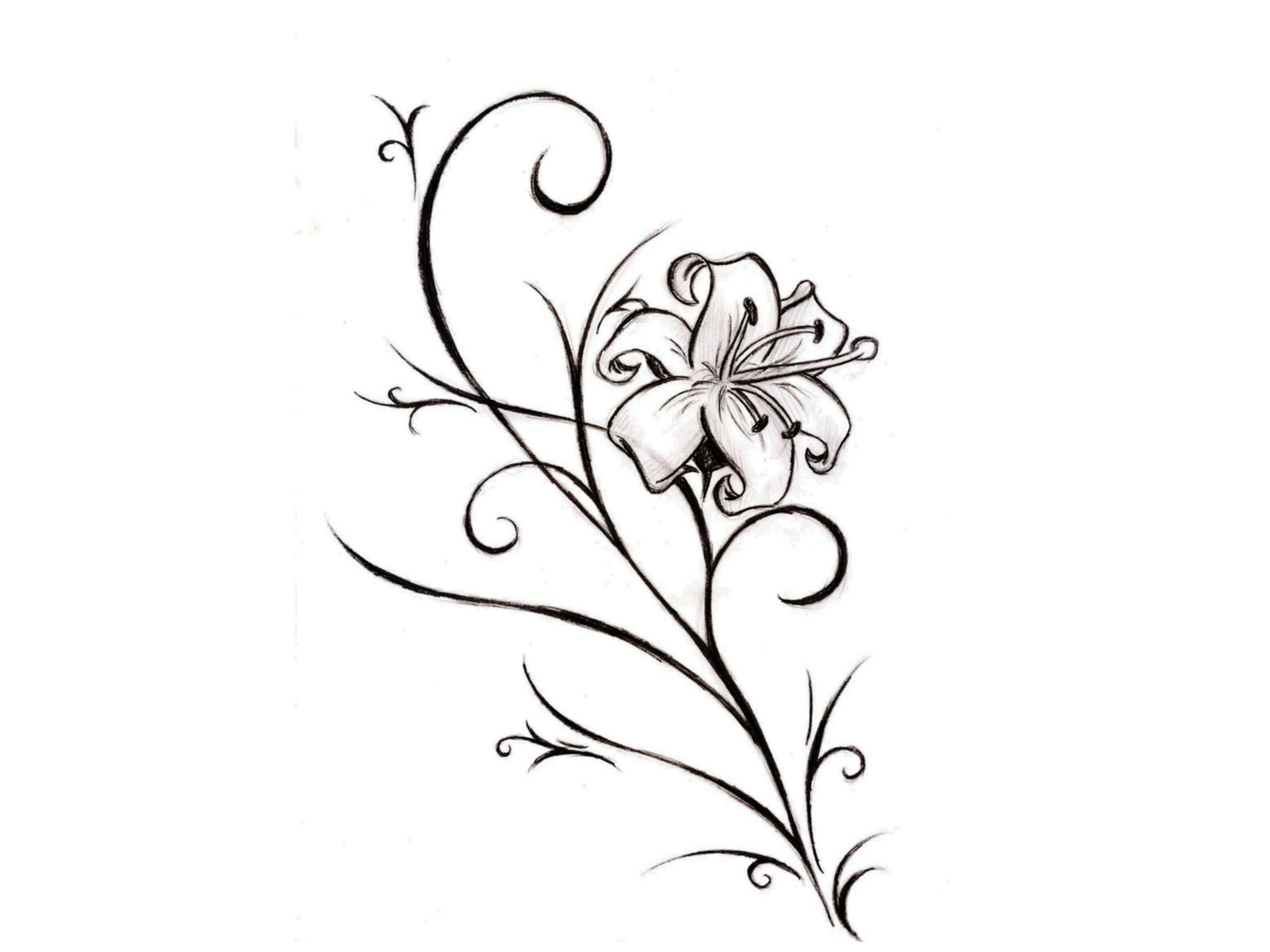 Feminine lily flower tattoo design in 2017 real photo pictures all images to feminine lily flower tattoo design ccuart Choice Image