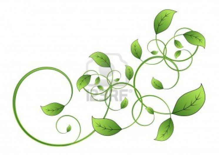 Floral Vine Leaf Isolated Tattoo On White Background