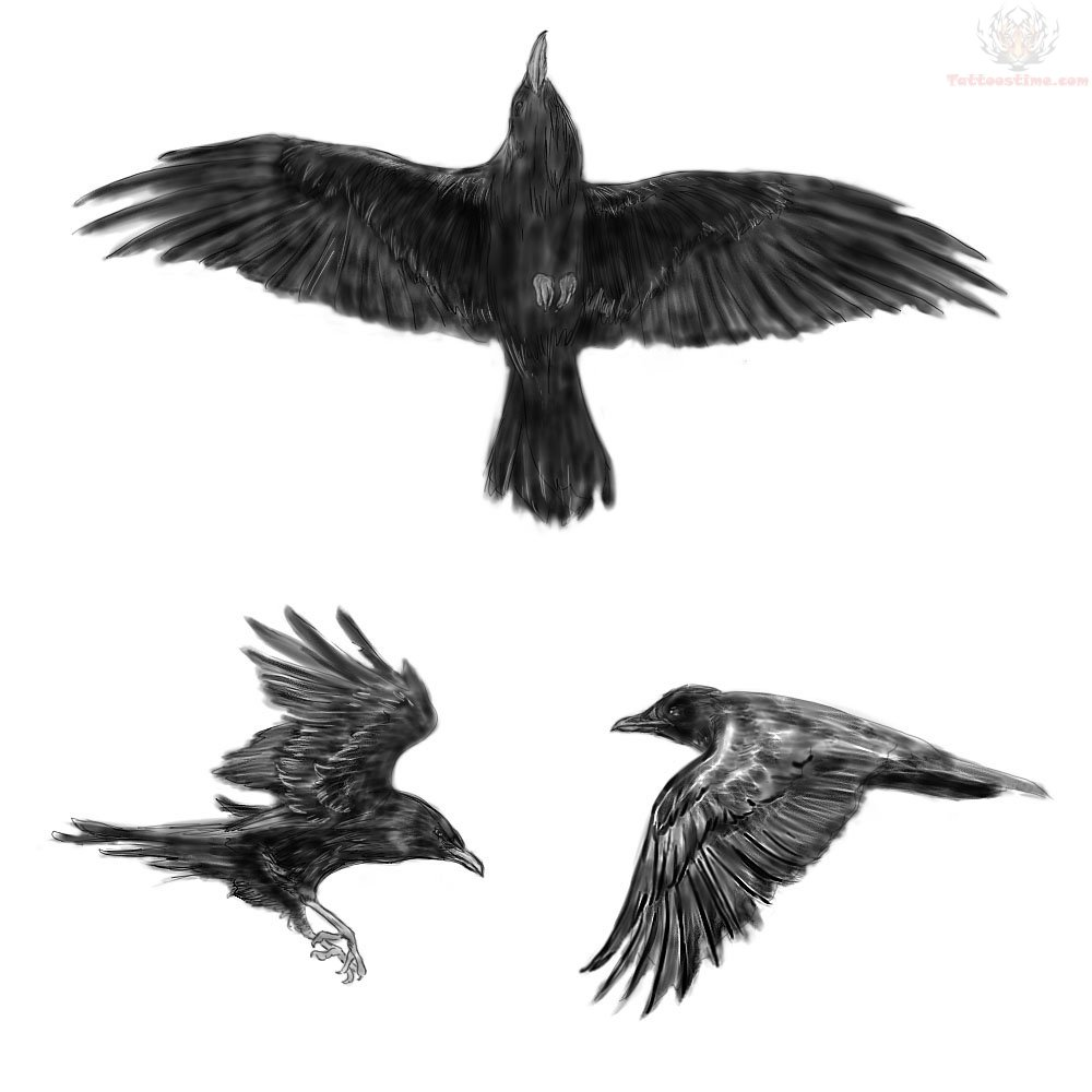 flying crow tattoo drawing in 2017 real photo pictures images flying crow tattoo drawing 1 flying