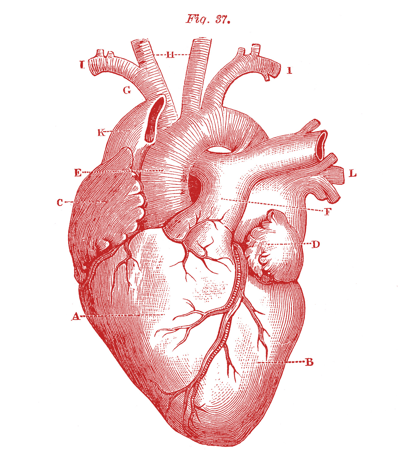 HD Broken Heart Tattoo Design In 2017 Real Photo Pictures Images And Sketches Collections