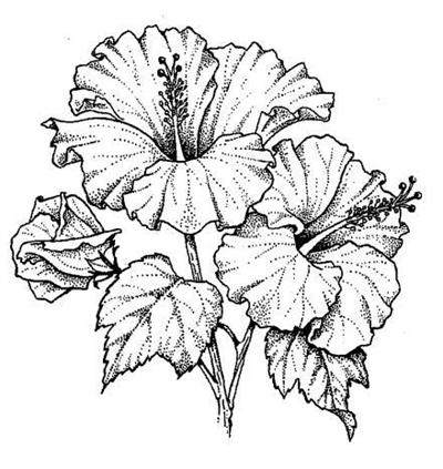 Hibiscus Flowers Tattoo Sample