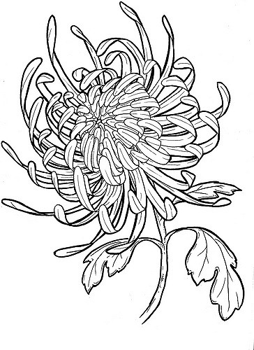 Japanese Flower Line Drawing : Japanese chrysanthemum flower tattoo design in real