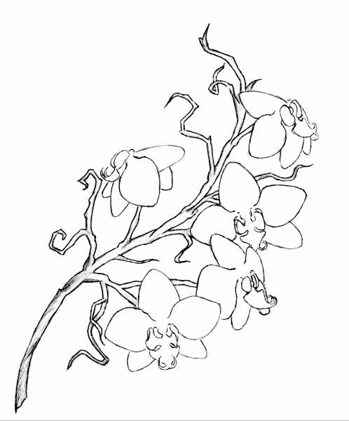 My Own Orchid Tattoo Design
