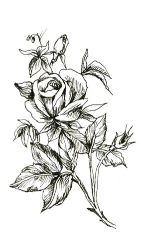 Once Again Rose Tattoo Design