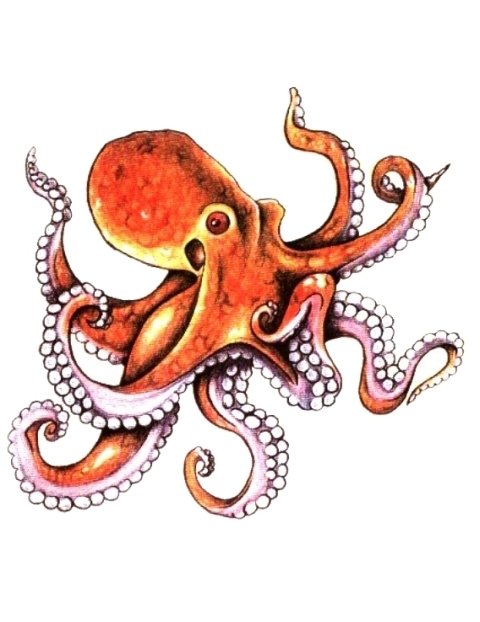 Orange And Blue Octopus Tattoo On Biceps