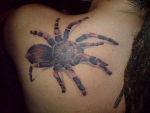 Pic Of 3D Spider Tattoo