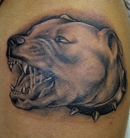 Pit Bull Angry Tattoo On Chest