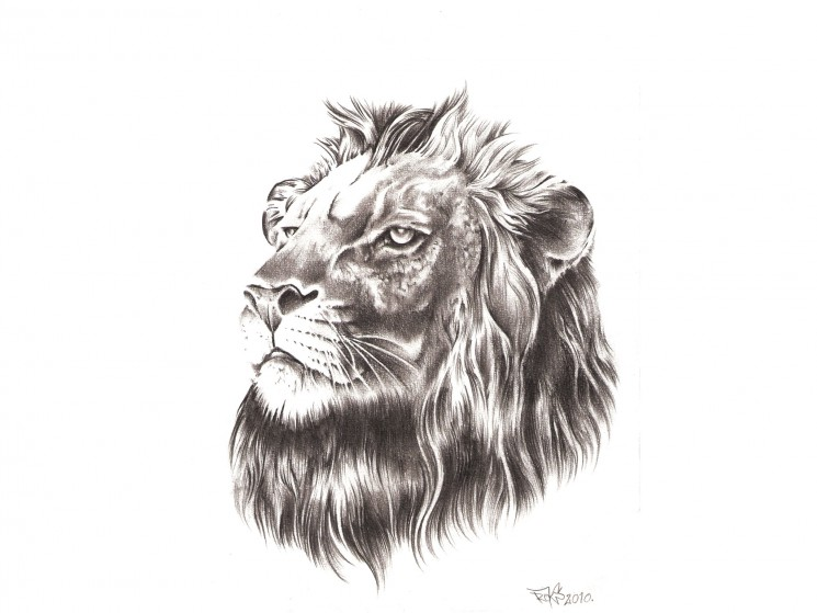 Real Hairy Lion Tattoo Design