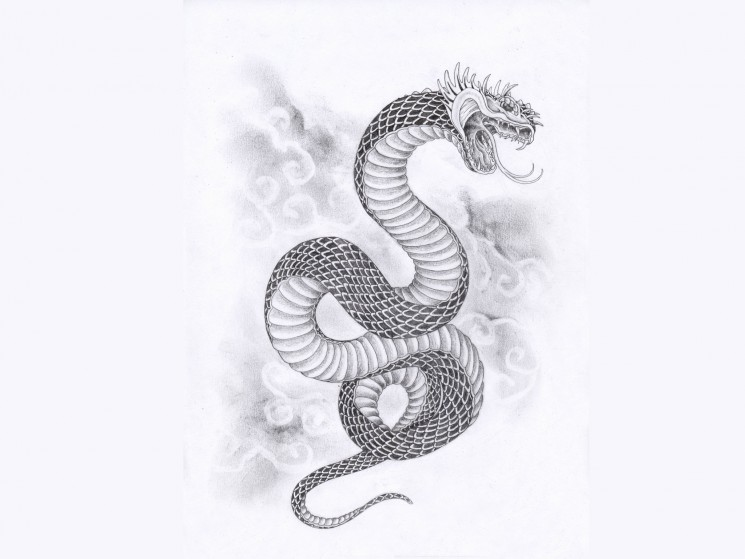 Snake Anchor Tattoo With Designs