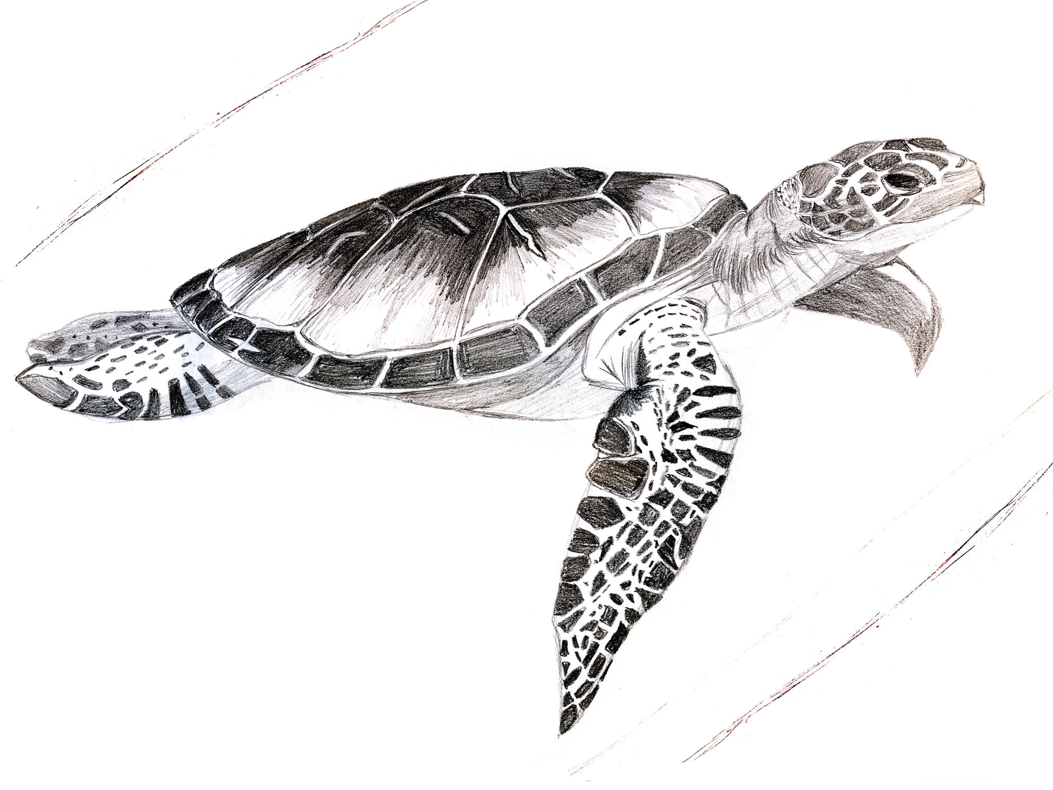 Swimming Turtle Tattoo Designs In 2017 Real Photo Pictures Images