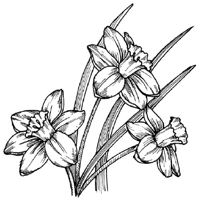 tulips tattoo drawing in 2017 real photo pictures images and sketches tattoo collections