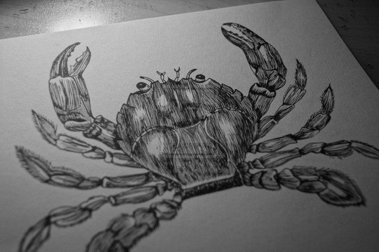 Two Crabs Tattoo Designs