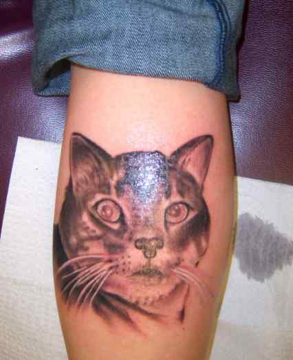 Angry Cat Tattoo on Leg photo - 1