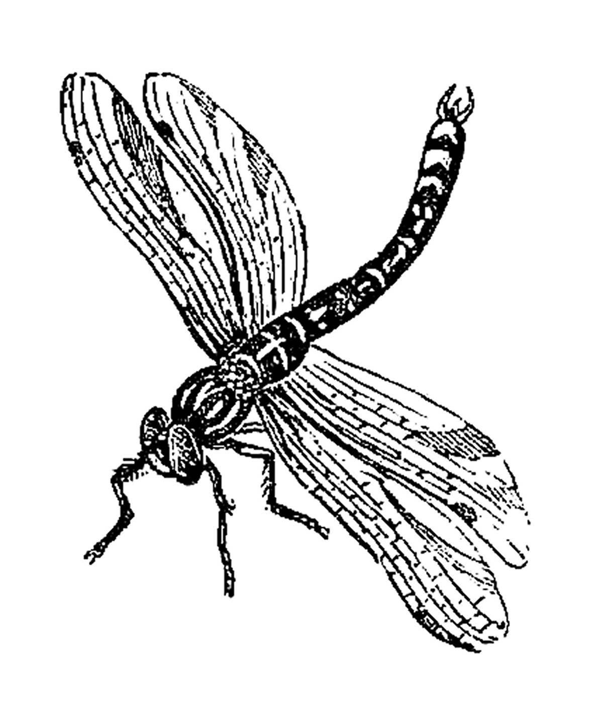 Bee Insect Tattoo Graphic photo - 1