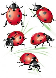 Best Bug Insect Tattoo Design photo - 1