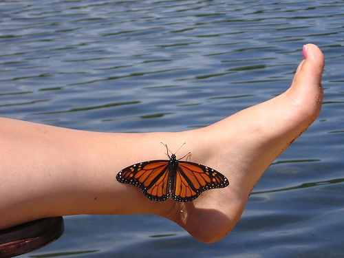 Butterfly 3D Tattoo Fashion For Women photo - 1