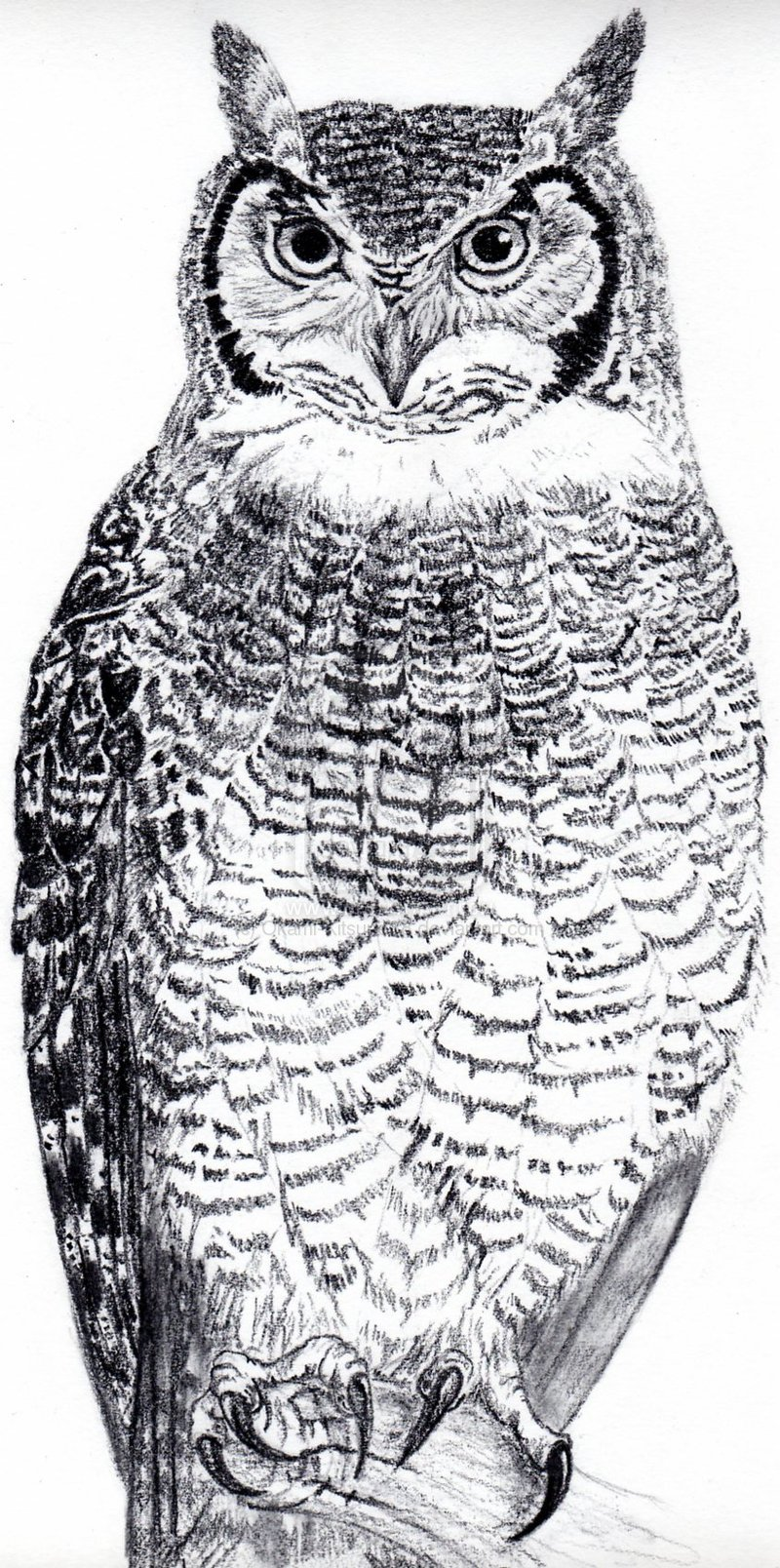Great Horned Owl Black And Grey Tattoo Grey Horned Owl...