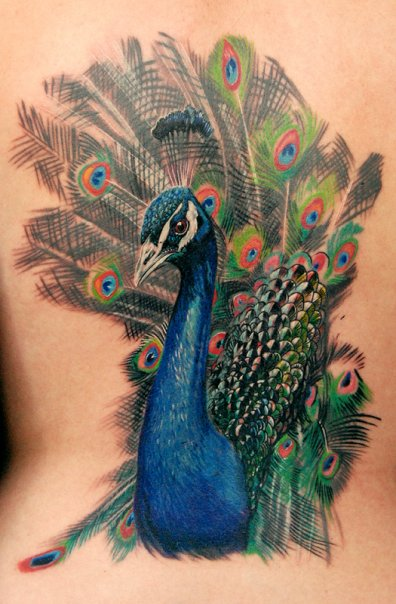 Peacock Feather Tattoo Picture photo - 1