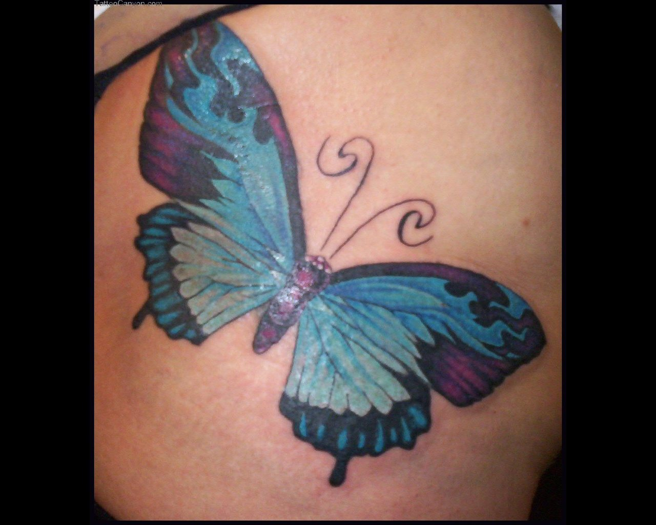 Skyblue Butterfly Tattoo photo - 2