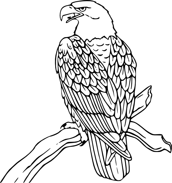 Two Tribal Eagle Tattoo Designs photo - 1